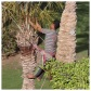 Palm Tree Pruning 7