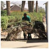 Palm Tree Pruning 2