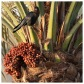 Crow in a Palm Tree